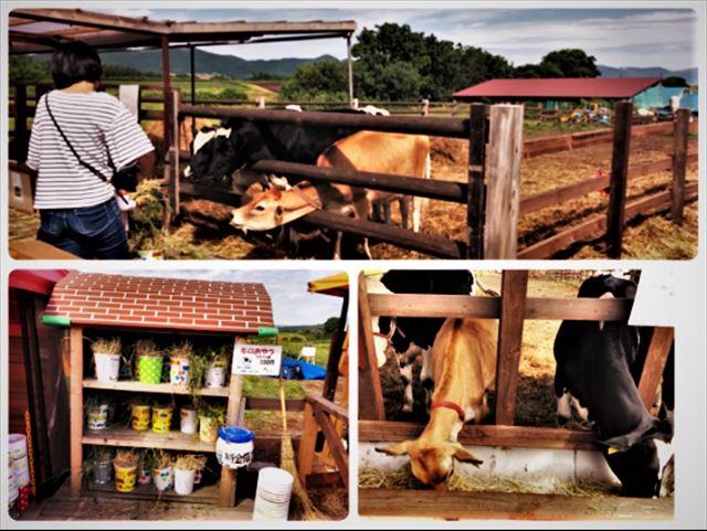 函館酪農社あいす118ミニ牧場