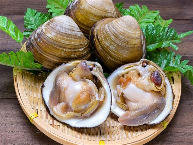十勝 日高 釧路 グルメ ホッキ貝
