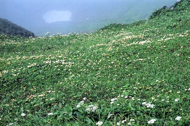 北海道 登山 初級 富良野岳 山頂のお花畑