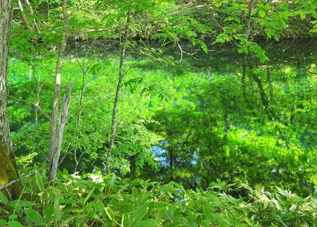 鳥沼公園 緑の沼