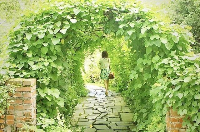 上野ファーム インスタグラム グリーンのトンネルをくぐる女性