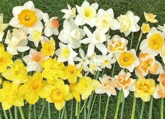 上野ファーム インスタグラム 春 黄色の花々