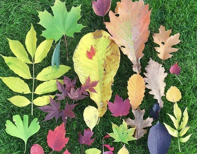 上野ファーム インスタグラム 秋 暖色系に染まる葉