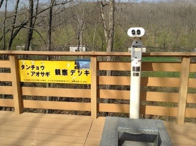釧路 タンチョウ 釧路市動物園 観察デッキ