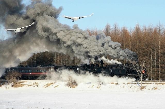 釧路 タンチョウ 釧路湿原を駆け抜けるSL冬の湿原号