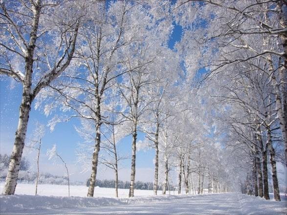 十勝牧場 冬
