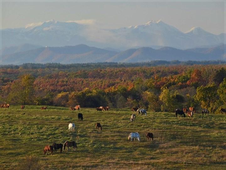 十勝牧場 周辺風景