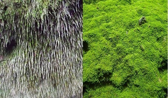 苔の回廊 苔