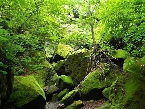 苔の回廊 苔ワールド