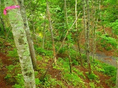 第二の苔の回廊 目印 ピンク テープ