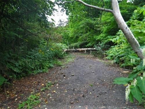苔の回廊 倒木