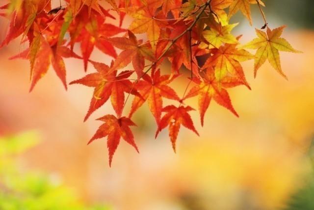 豊似湖 紅葉 時期