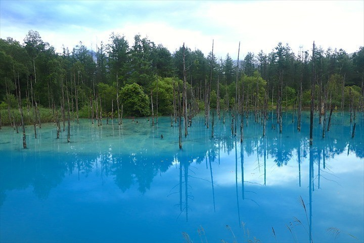 美瑛 フォトスポット 青い池