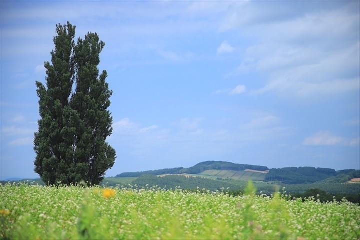 パッチワークの路 ケンとメリーの木